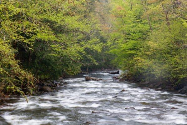 Chittenango Creek in Madison County, NY