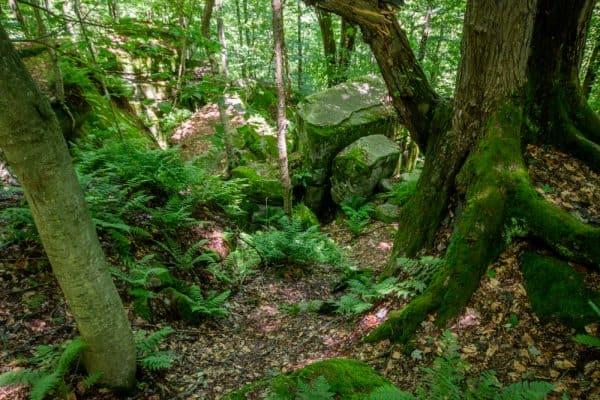Panama Rocks in Chautauqua County, New York