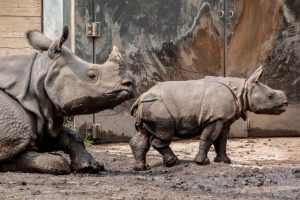 The Buffalo Zoo: Exploring the United State's 3rd Oldest Zoo