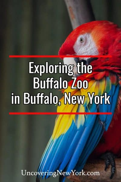 Visiting the Buffalo Zoo in Buffalo, New York
