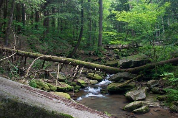 Stoddard Creek near Bridal Falls in Allegany State Park