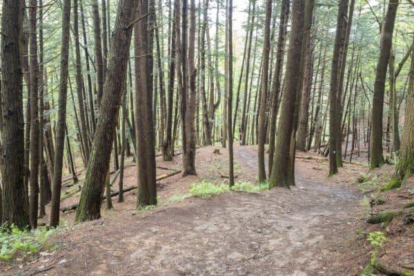 Trail to Mine Kill Falls in Central New York