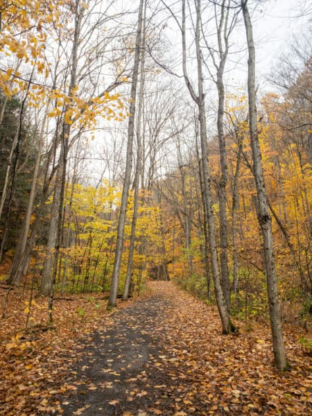 Handicapped accessible trail to Tinkers Falls
