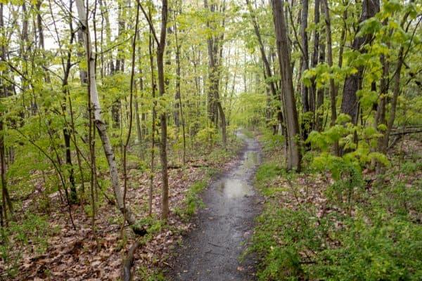 Trail to Barberville Falls Nature Preserve