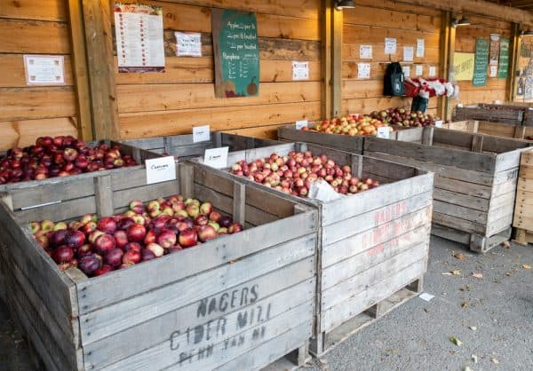 Bins of apples at Burrville Cider Mill in Jefferson County NY