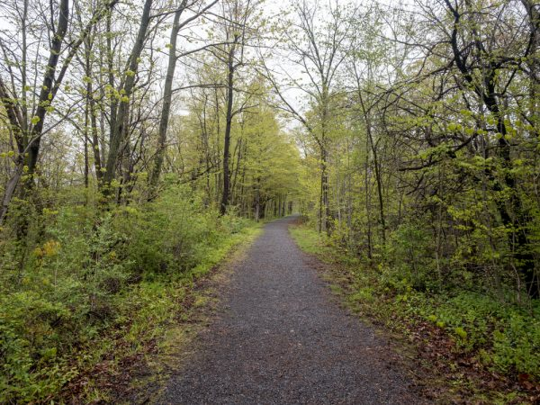 Ontario Pathways in Phelps NY