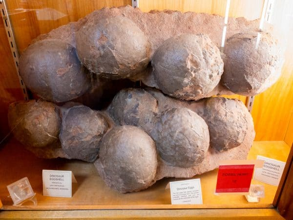 Fossilized dinosaur eggs at the Hicksville Gregory Museum in Hicksville New York