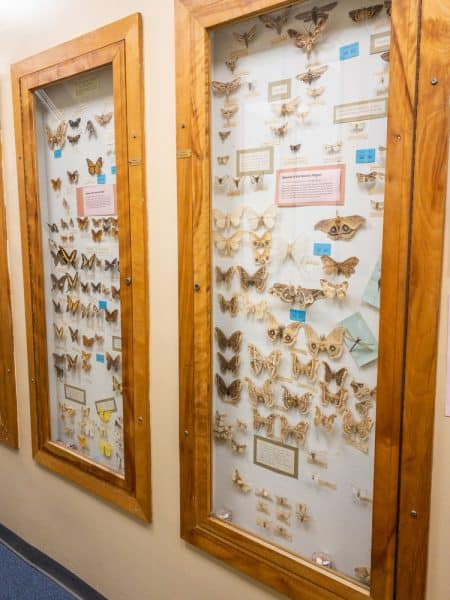 Butterflies on display at the Hicksville Gregory Museum in Hicksville New York