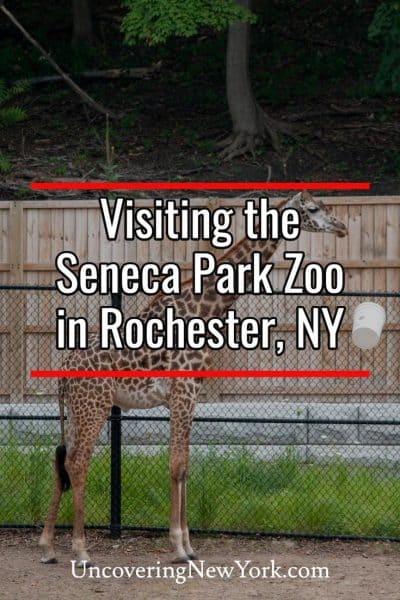 Visiting Seneca Park Zoo in Rochester, New York