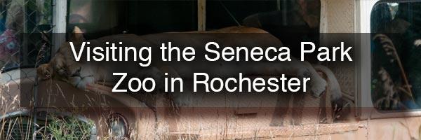 Seneca Park Zoo in Rochester NY