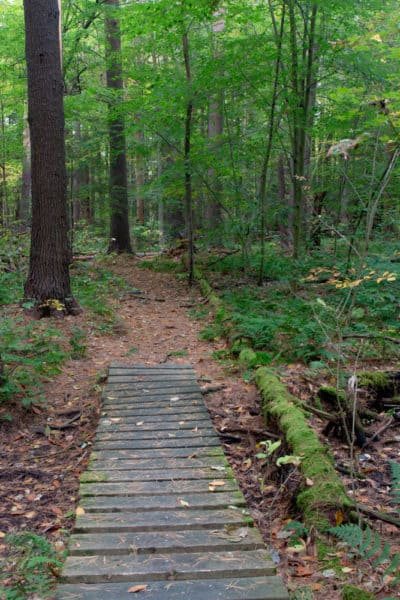 Boardwalk in Ushers Road State Forest in Saratoga County NY