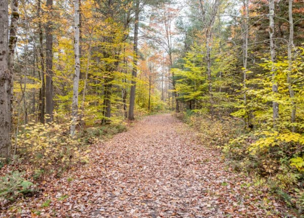 The trail to Lampson Falls in St. Lawrence County.