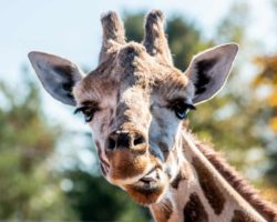 Animal Adventure Park Near Binghamton: More than Just April the Giraffe