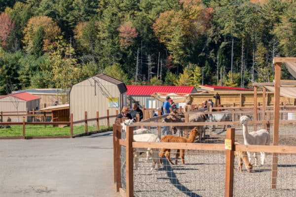 The enclosures at Animal Adventure Park in Harpursville New York