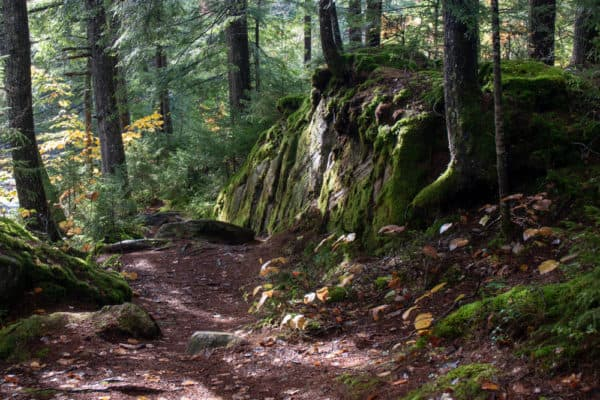Scene along the Auger Falls Trail in Hamilton County NY