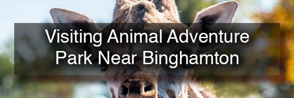 Visiting Animal Adventure Park in Binghamton NY