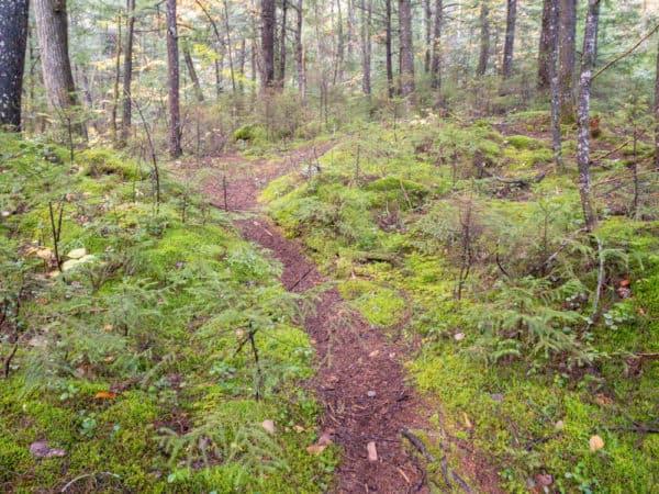 Jimmy Creek Trail in the Adirondacks