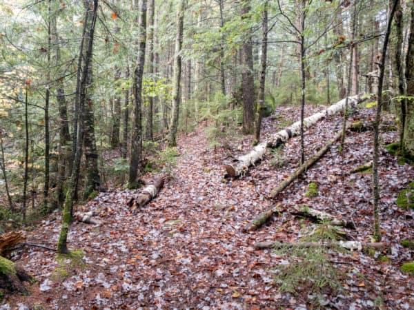 Trail along Jimmy Creek in Hamilton County NY