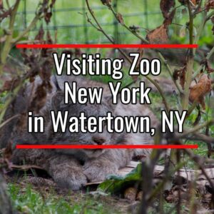 The New York Zoo in Watertown NY