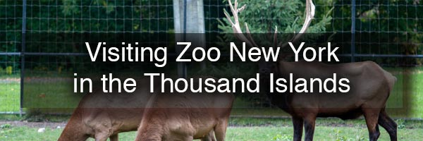 Zoo New York in Watertown NY