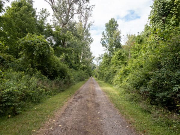 Trail in Beechwood State Park in Sodus Point New York