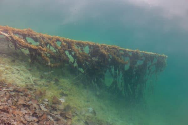 Log below the water in Green Lake near Syracuse New York