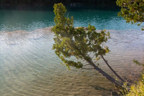Tree overhanging a lake in Green Lakes State Park in Onondaga County New York