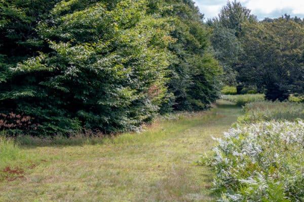Trail through Griffis Sculpture Park in Cattaraugus County New York