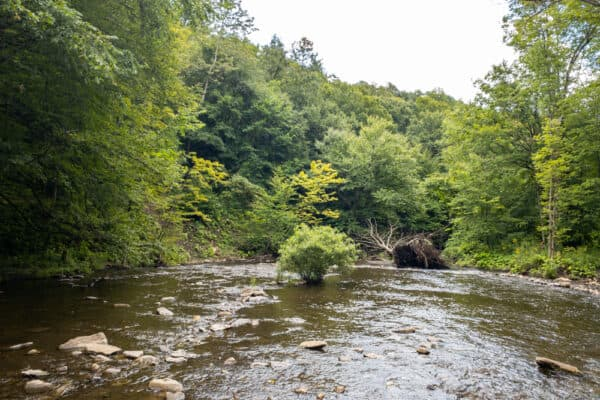Lansing Kill in Pixley Falls State Park