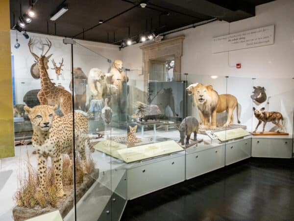 Taxidermied animals at the Buffalo Museum of Science.