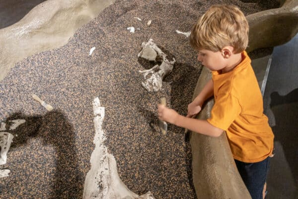 Kid digging for fossils at the Buffalo Museum of Science in western New York