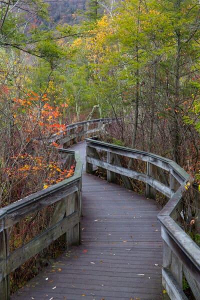 Boardwalk trail at Labrador Hollow Unique Area in Onondaga County New York