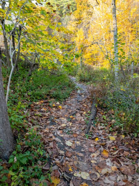 Trail in Ludlowville Park in Lansing New York
