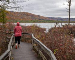 Hiking the Beautiful Boardwalk in the Labrador Hollow Unique Area