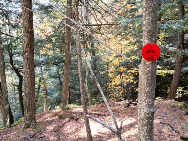 Red disc marking the Stag Brook Falls Trail.