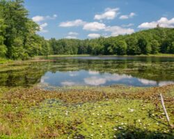 Hiking the Lily Lake Trail in Chenango Valley State Park Near Binghamton