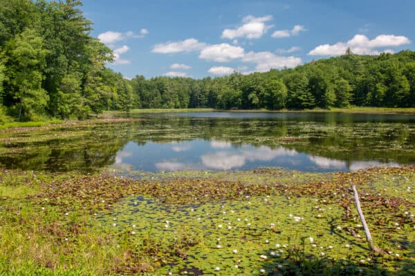 Hiking the Lake Lily Trail in Chenango Valley State Park
