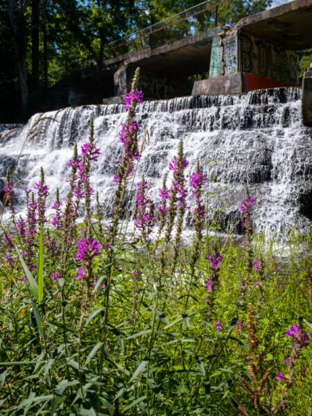 Wild flowers in front of Papermill falls in Avon New York