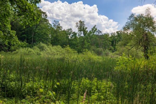Meadow in Corbett's Glen in Rochester NY
