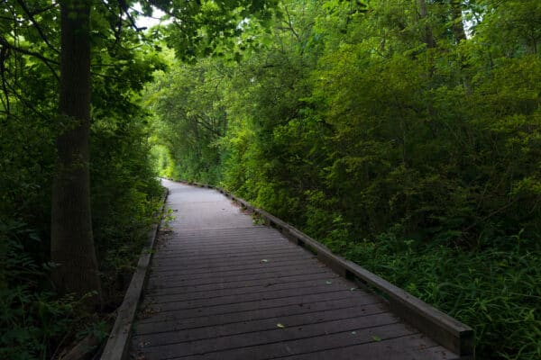 Boardwalk in Corbett's Glen Nature Park in Monroe County NY