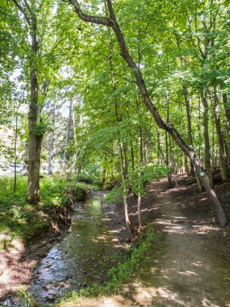 Hiking trail at Powder Mills Park in Monroe County NY