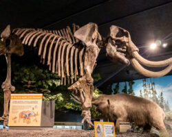 Visiting the Fantastic Rochester Museum and Science Center