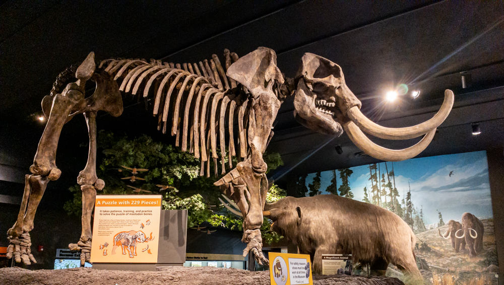Mastodon at the Rochester Museum and Science Center in New York