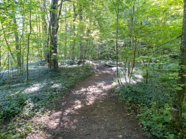 Owen D Young Nature Trail in the forest of Montgomery County NY